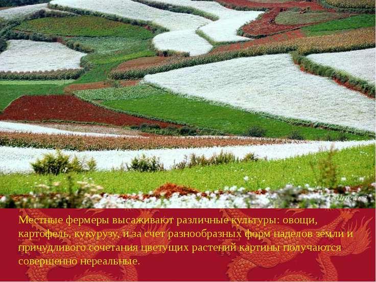 Местные фермеры высаживают различные культуры: овощи, картофель, кукурузу, и ...