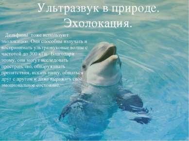 Ультразвук в природе. Эхолокация. Дельфины тоже используют эхолокацию. Они сп...