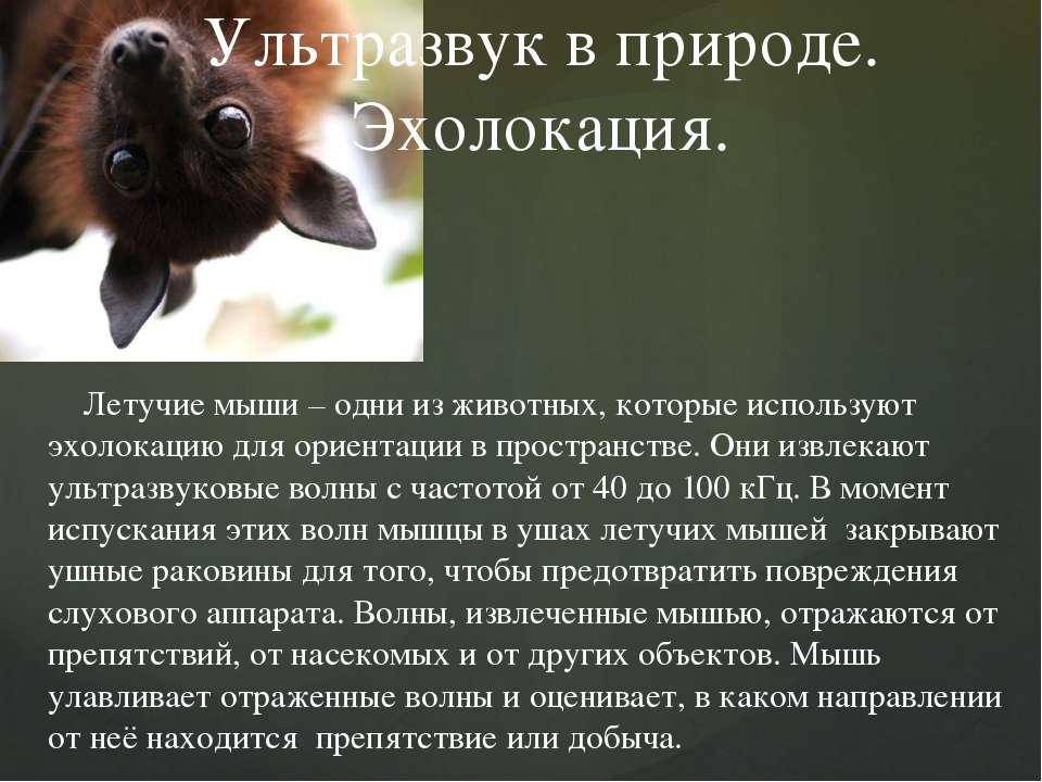 Летучие мыши – одни из животных, которые используют эхолокацию для ориентации...