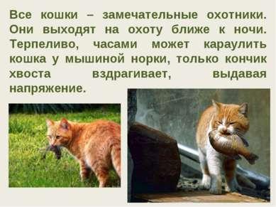 Все кошки – замечательные охотники. Они выходят на охоту ближе к ночи. Терпел...