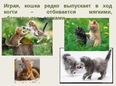 Играя, кошка редко выпускает в ход когти – отбивается мягкими, «бархатными» л...