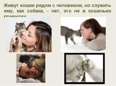 Живут кошки рядом с человеком, но служить ему, как собака, - нет, это не в ко...