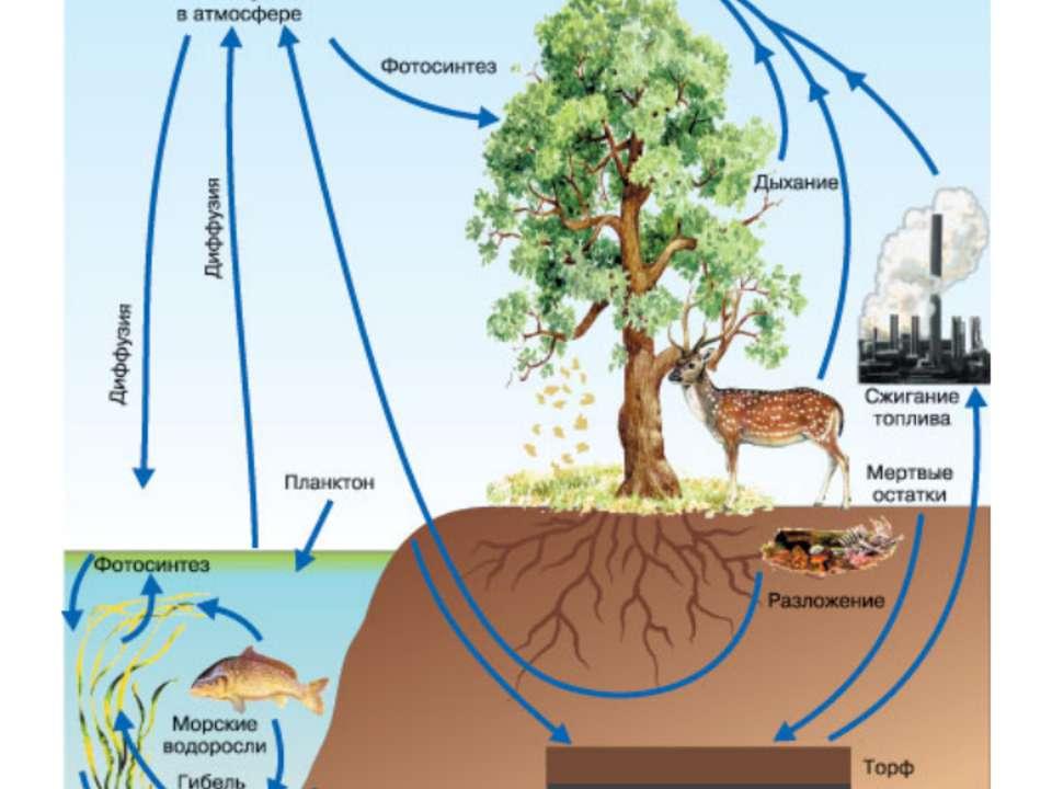 2. Круговорот углерода