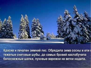 Красив и печален зимний лес. Обрядила зима сосны и ели в тяжелые снеговые шуб...