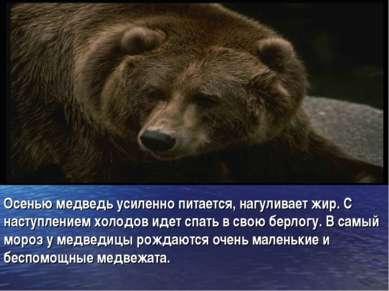 Осенью медведь усиленно питается, нагуливает жир. С наступлением холодов идет...