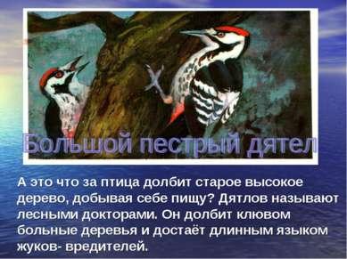А это что за птица долбит старое высокое дерево, добывая себе пищу? Дятлов на...