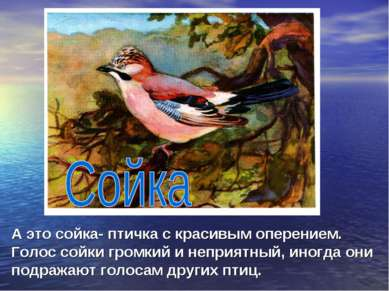 А это сойка- птичка с красивым оперением. Голос сойки громкий и неприятный, и...