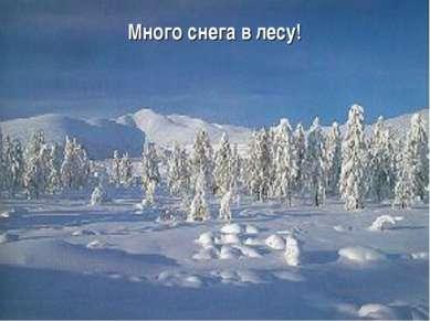 Много снега в лесу!