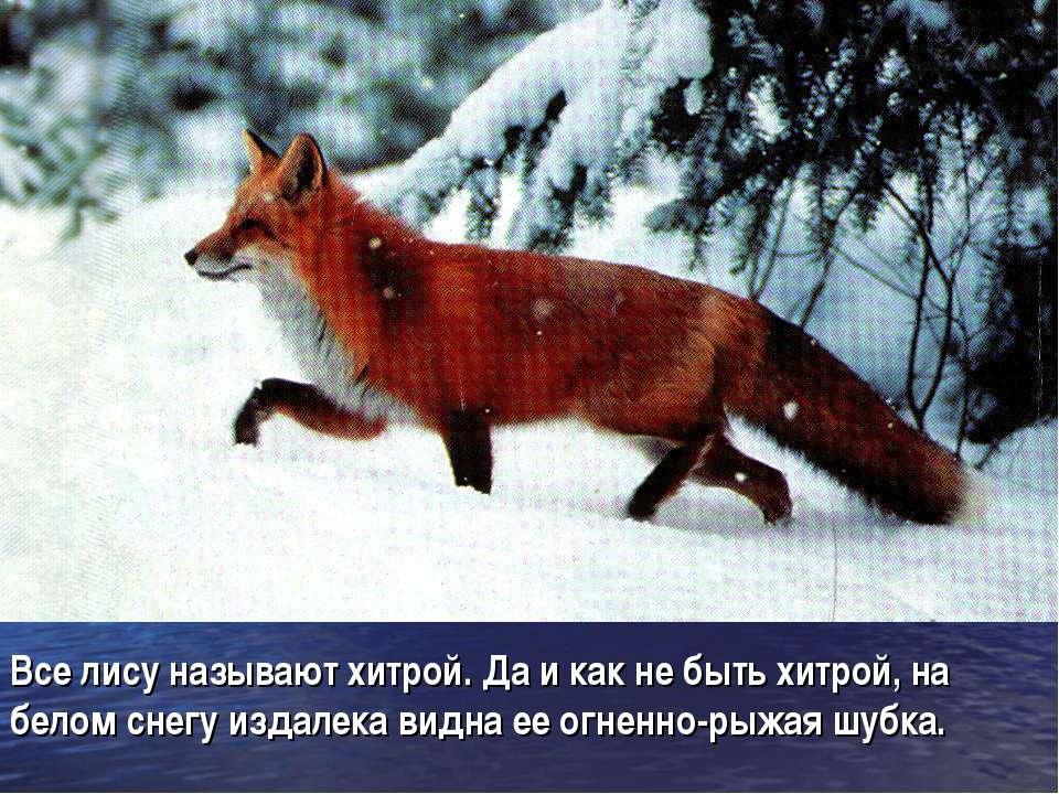 Все лису называют хитрой. Да и как не быть хитрой, на белом снегу издалека ви...