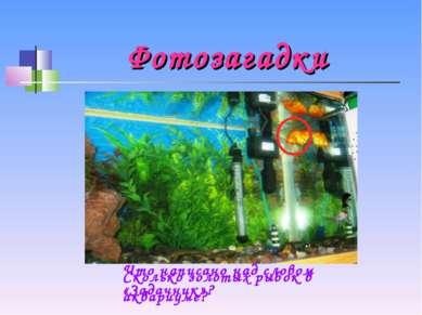 Фотозагадки Что написано над словом «Задачник»? Сколько золотых рыбок в аквар...