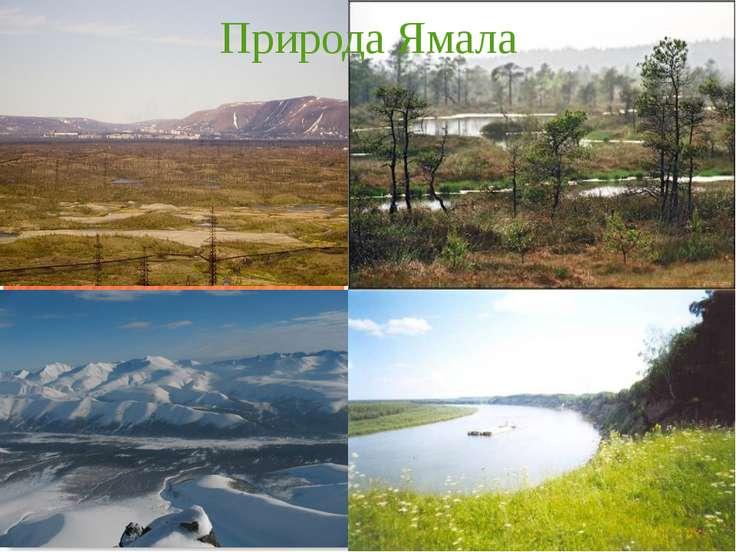 Природа Ямала