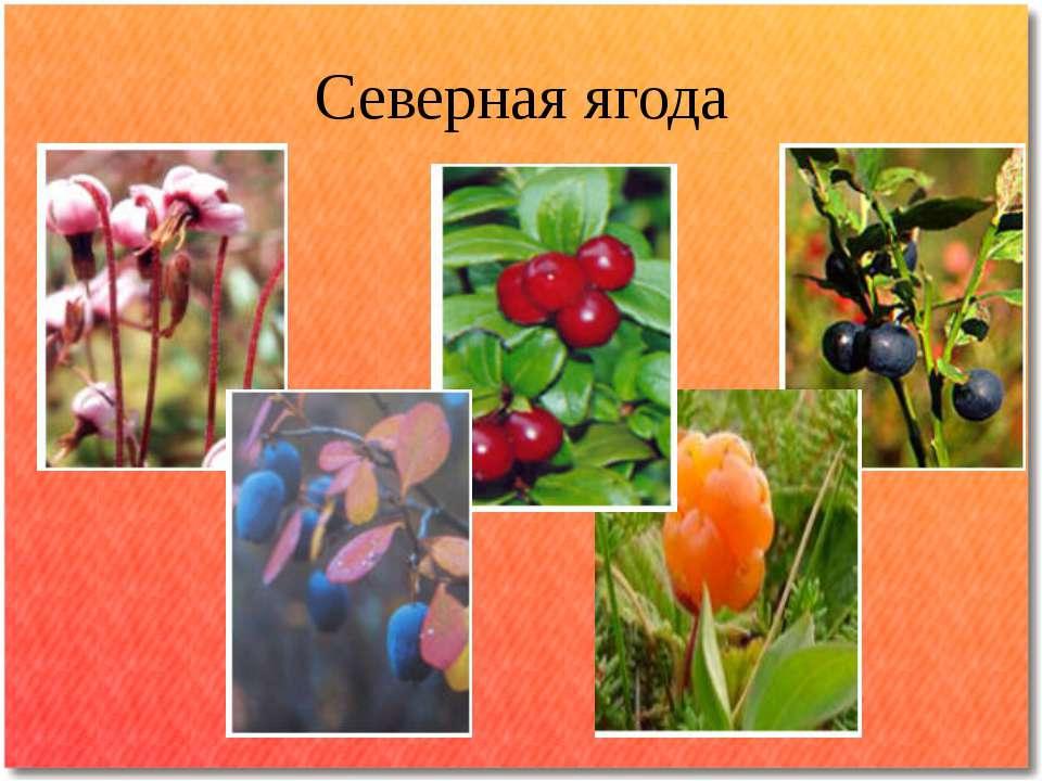 Северная ягода