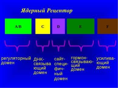 Ядерный Рецептор А/В С D Е F регуляторный домен ДНК-связывающий домен сайт-сп...