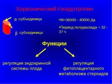 Функции М=36000 - 40000 Да Период полураспада = 32 - 37 ч Хорионический гонад...