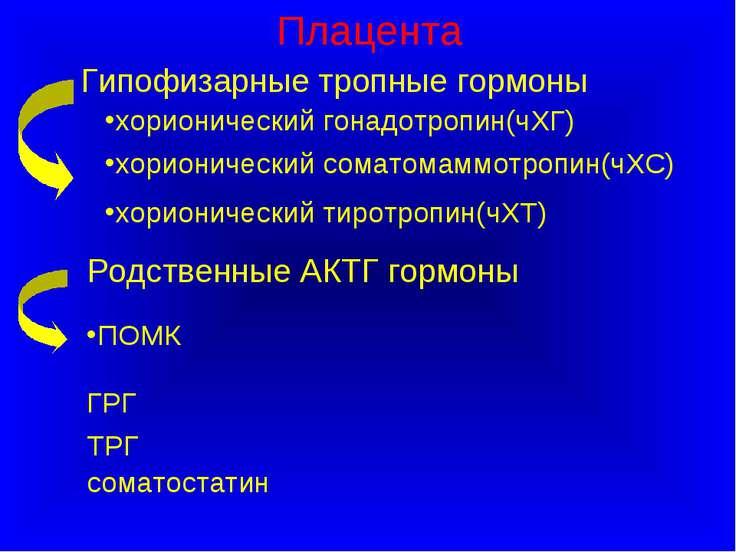 Плацента Гипофизарные тропные гормоны хорионический гонадотропин(чХГ) хориони...