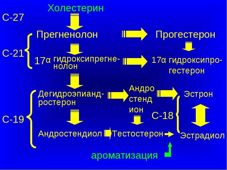 С-27 Холестерин Прегненолон Прогестерон Тестостерон Эстрадиол С-18 С-21 С-19 ...