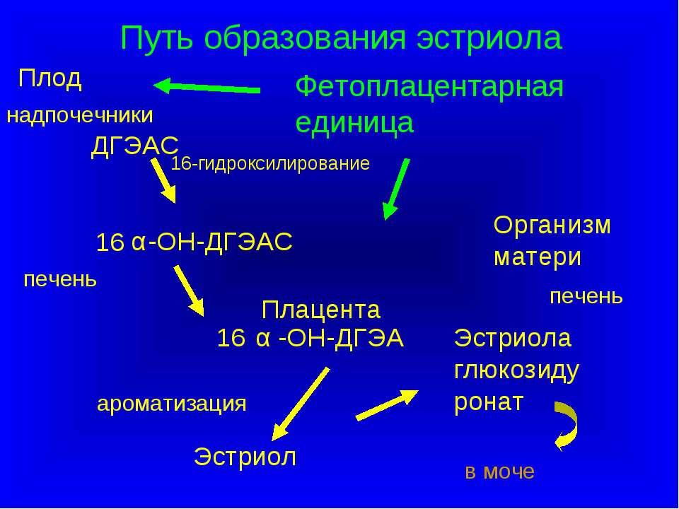 ДГЭАС 16 -ОН-ДГЭАС -ОН-ДГЭА 16 Эстриол Эстриола глюкозидуронат в моче Плод Ор...