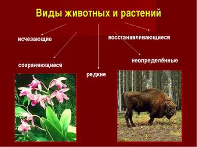 Виды животных и растений исчезающие сохраняющиеся редкие восстанавливающиеся ...