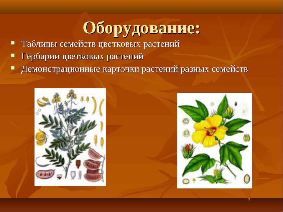 Оборудование: Таблицы семейств цветковых растений Гербарии цветковых растений...