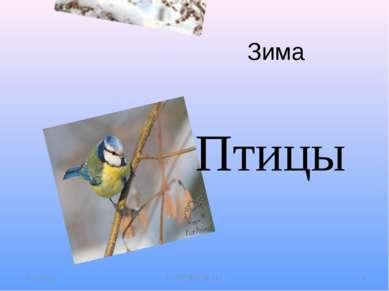 Зима 01.11.2011 С-Пб ГДОУ № 112 * Птицы С-Пб ГДОУ № 112