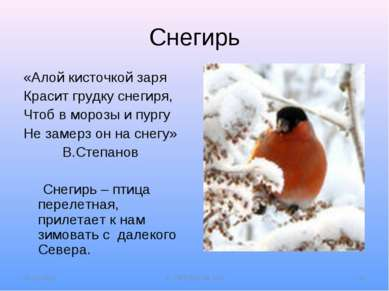 Снегирь «Алой кисточкой заря Красит грудку снегиря, Чтоб в морозы и пургу Не ...