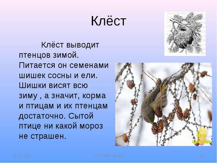 Клёст Клёст выводит птенцов зимой. Питается он семенами шишек сосны и ели. Ши...