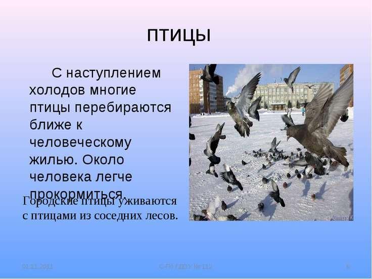 птицы Городские птицы уживаются с птицами из соседних лесов. С наступлением х...