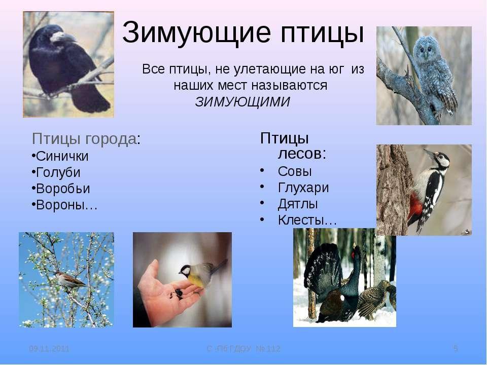 Зимующие птицы Все птицы, не улетающие на юг из наших мест называются ЗИМУЮЩИ...