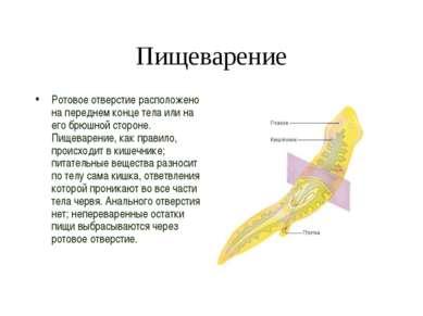 Пищеварение Ротовое отверстие расположено на переднем конце тела или на его б...