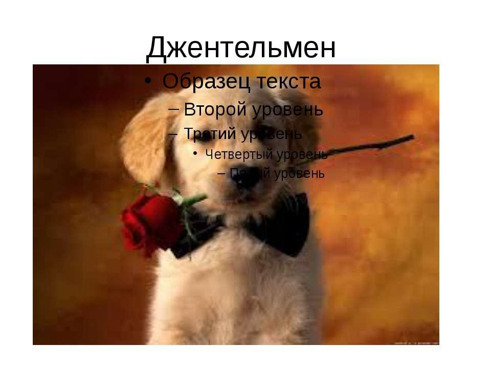 Джентельмен