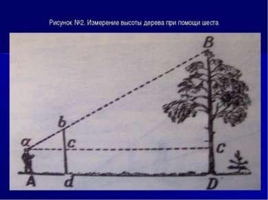Рисунок №2. Измерение высоты дерева при помощи шеста