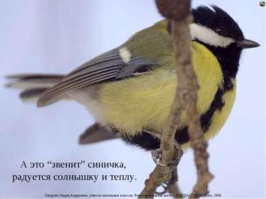 """А это """"звенит"""" синичка, радуется солнышку и теплу. Лазарева Лидия Андреевна, ..."""
