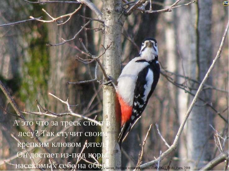 А это что за треск стоит в лесу? Так стучит своим крепким клювом дятел. Он до...