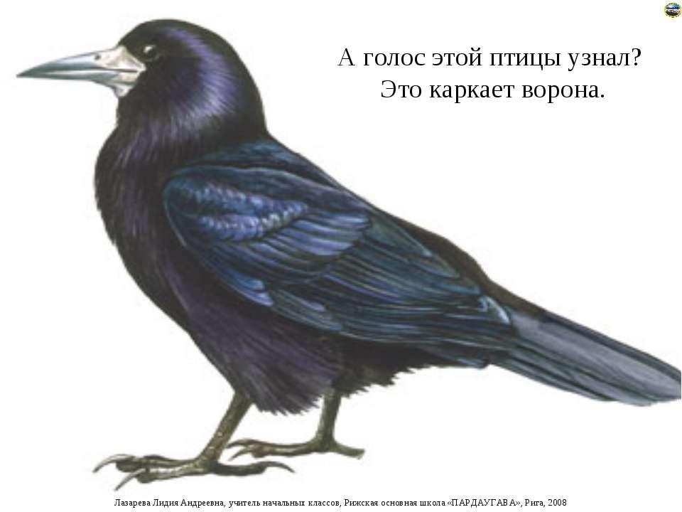 А голос этой птицы узнал? Это каркает ворона. Лазарева Лидия Андреевна, учите...