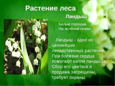 Растение леса Ландыш Ландыш - одно из ценнейших лекарственных растений. При б...