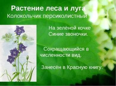 Растение леса и луга Колокольчик персиколистный Сокращающийся в численности в...