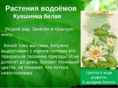 Растения водоёмов Кувшинка белая Цветок в воде родился, А дождика боится. Ред...