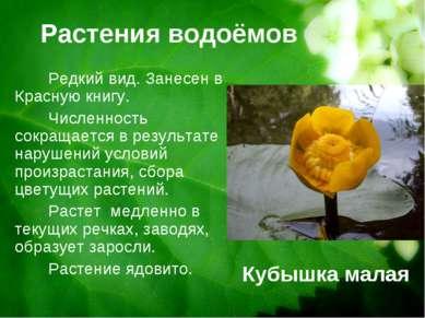 Растения водоёмов Кубышка малая Редкий вид. Занесен в Красную книгу. Численно...