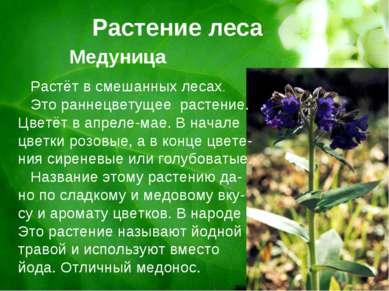 Растение леса Медуница Растёт в смешанных лесах. Это раннецветущее растение. ...