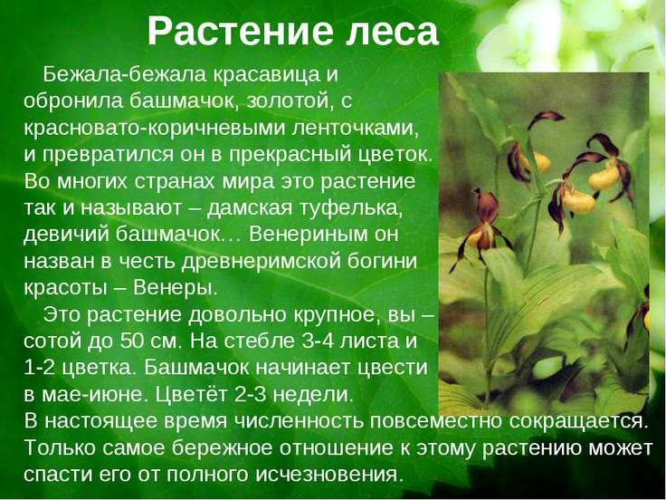 Растение леса Бежала-бежала красавица и обронила башмачок, золотой, с краснов...