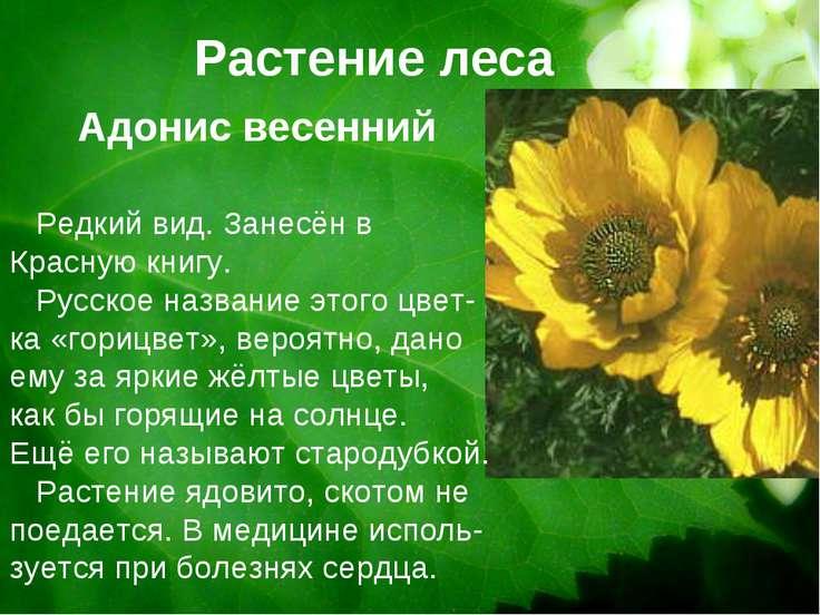 Растение леса Редкий вид. Занесён в Красную книгу. Русское название этого цве...