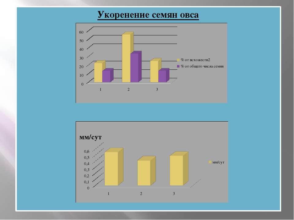 Укоренение семян овса Динамика роста семян овса