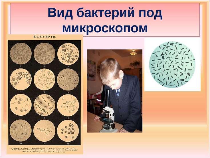 Вид бактерий под микроскопом