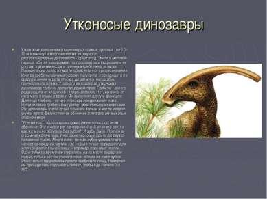 Утконосые динозавры Утконосые динозавры (гадрозавры) - самые крупные (до 10 -...