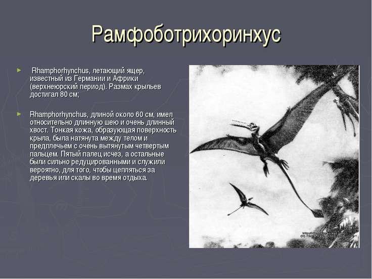 Рамфоботрихоринхус Rhamphorhynchus, летающий ящер, известный из Германии и Аф...