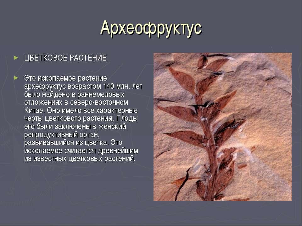 Археофруктус ЦВЕТКОВОЕ РАСТЕНИЕ Это ископаемое растение архефруктус возрастом...