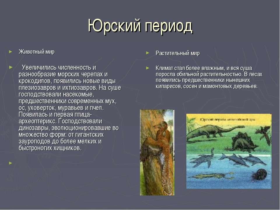 Юрский период Животный мир Увеличились численность и разнообразие морских чер...