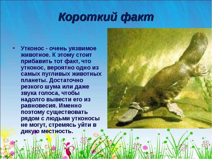 Короткий факт Утконос - очень уязвимое животное. К этому стоит прибавить тот ...