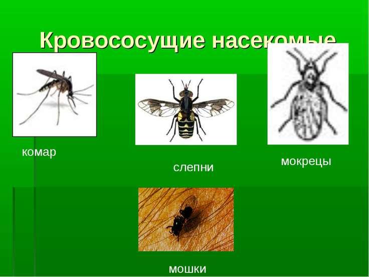 Кровососущие насекомые комар мокрецы слепни мошки