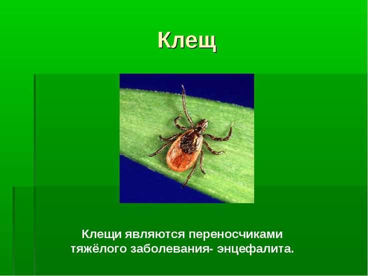 Клещ Клещи являются переносчиками тяжёлого заболевания- энцефалита.